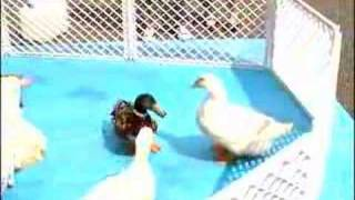 アヒルと鴨のペットロッカー