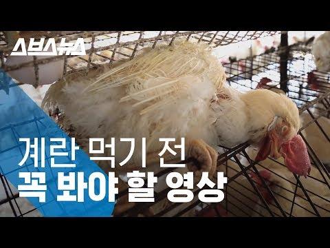 , title : '생각보다 더 열악한 계란 낳는 닭의 현실 / 스브스뉴스