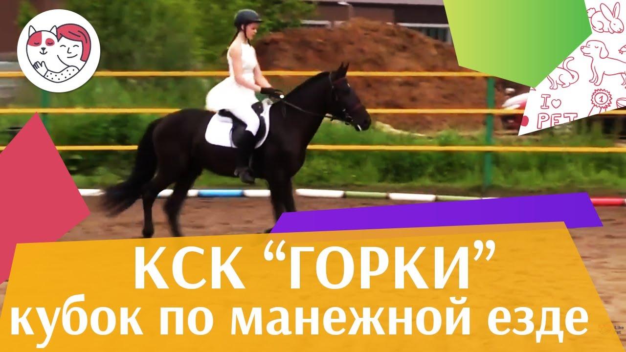 Летний кубок КСК Горки по манежной езде КЮР часть 11 на ilikepet