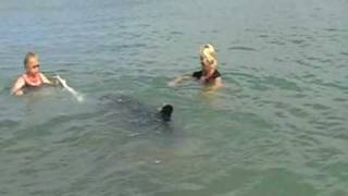 preview picture of video 'Moko the wild dolphin  March Mahia Beach NZ 2009'