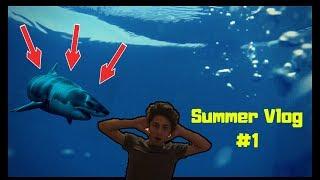 შავ ზღვაში ზვიგენი გამეჩითა?Summer Time #1