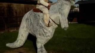 Die besten 100 Videos Star Wars Tier Verkleidung