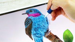 IPAD ART : HOW TO DRAW A REALISTIC BLUE BIRD | iPad Pro + Procreate