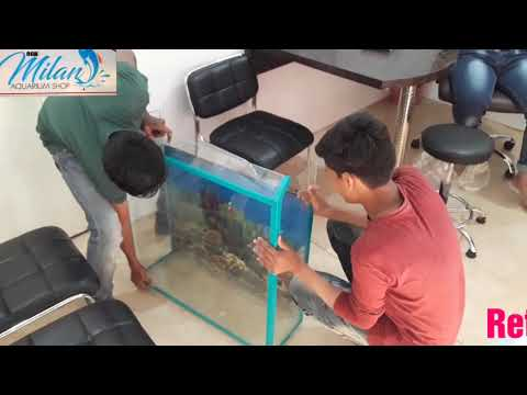Freshwater FISH Aquarium set-up & Decoration ideas