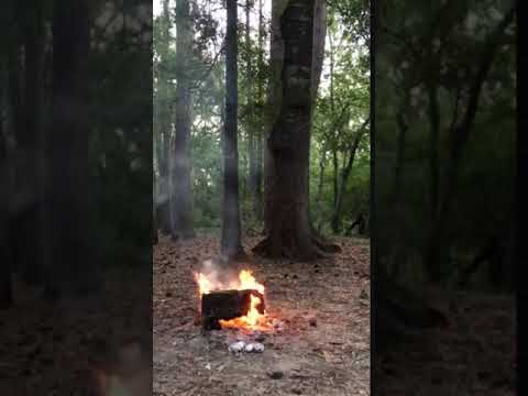 Video Of Holly Bluff Campground, TX