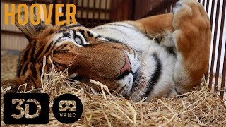 Truth About Circus Tigers in 3D