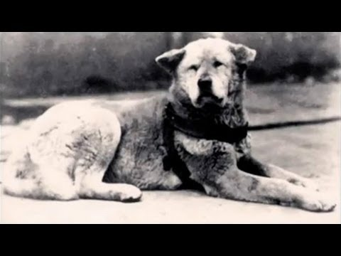 Hachiko - The True Story Of A Dog & Undying Love