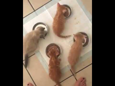 Anteprima Video Adesso...tutti a mangiare la pappa!!!