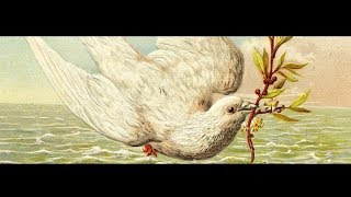 The Dove and The Olive Branch