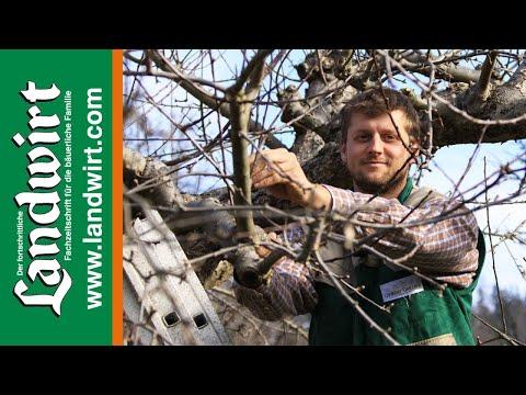 Obstbäume schneiden richtig gemacht | Landwirt.com letöltés