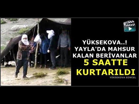 Yüksekova'da Yaylada Mahsur Kalan Berivanlar 5 Saatte Kurtarıldı