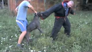 Andante Bandog Kennels Training day 2.m4v