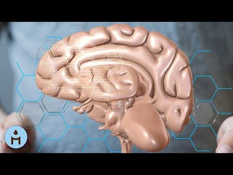Brain Music: Binaural Beats for Concentration, Brain Development, Calm Music for Science Studying