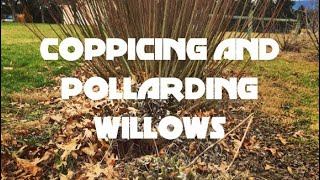 Coppicing and Pollarding Willows