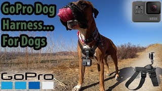 """GoPro Dog Harness """"Fetch"""" Review And Test! Put A GoPro On Fido!"""