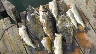 Хранение рыбы на рыбалке в жару