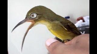How to Make Hummingbird Food Kobi Like It