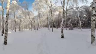 Панорама 360 на 180 Лес Зима | Двигайте мышкой по экрану монитора или плавно перемещайте телефон