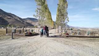 Maddi's Friesian Ranch Featured in TAHOMES Ranch Life