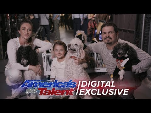 Elimination Interview: Pompeyo Family Dogs Send Love To Fans - America's Got Talent 2017 (видео)