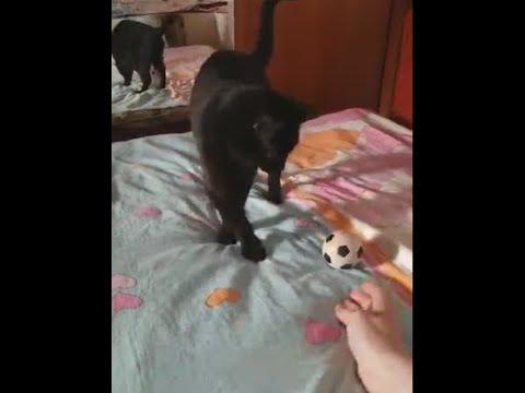 Весёлые кошки играют с мячом
