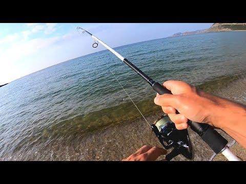 Havbars og fjæsing på Korsika