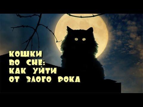 Кошки во сне как уйти от злого рока