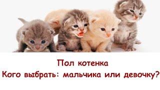 Пол котенка. Кого выбрать: мальчика или девочку?