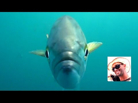 Video che pesca su rete sul fiume di video