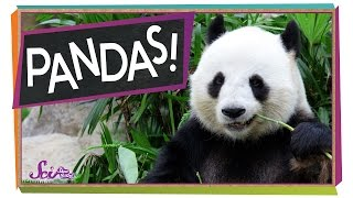 The Problem With Pandas | Animal Science For Kids