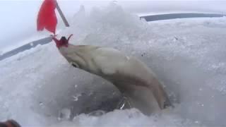Зимняя рыбалка на осколе пески базы