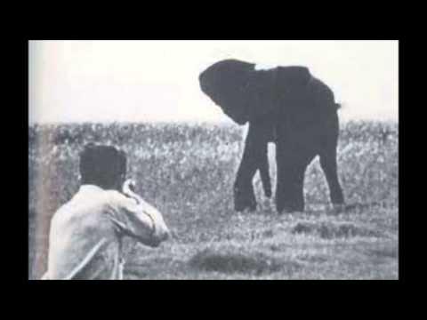 Orwell Shooting an Elephant