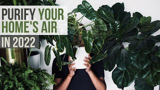 TOP 10 Best Air Purifier Plants You Need for Air Pollution
