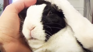 Rabbit 🐰 A Funny And Cute Bunny Videos Compilation [Funny Pets]