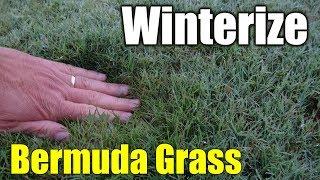 Winterize Bermuda Grass