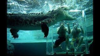 Ужасающий аттракцион с крокодилами/Любопытные факты