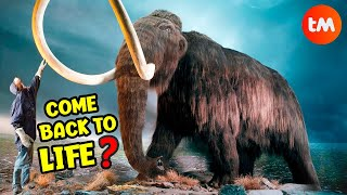 10 Things You DIDN´T KNOW About MAMMOTHS