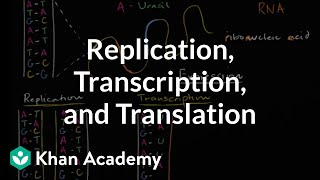 RNA Transcription And Translation
