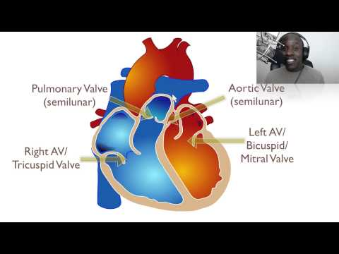 The Anatomy Of The Heart Youtube Download