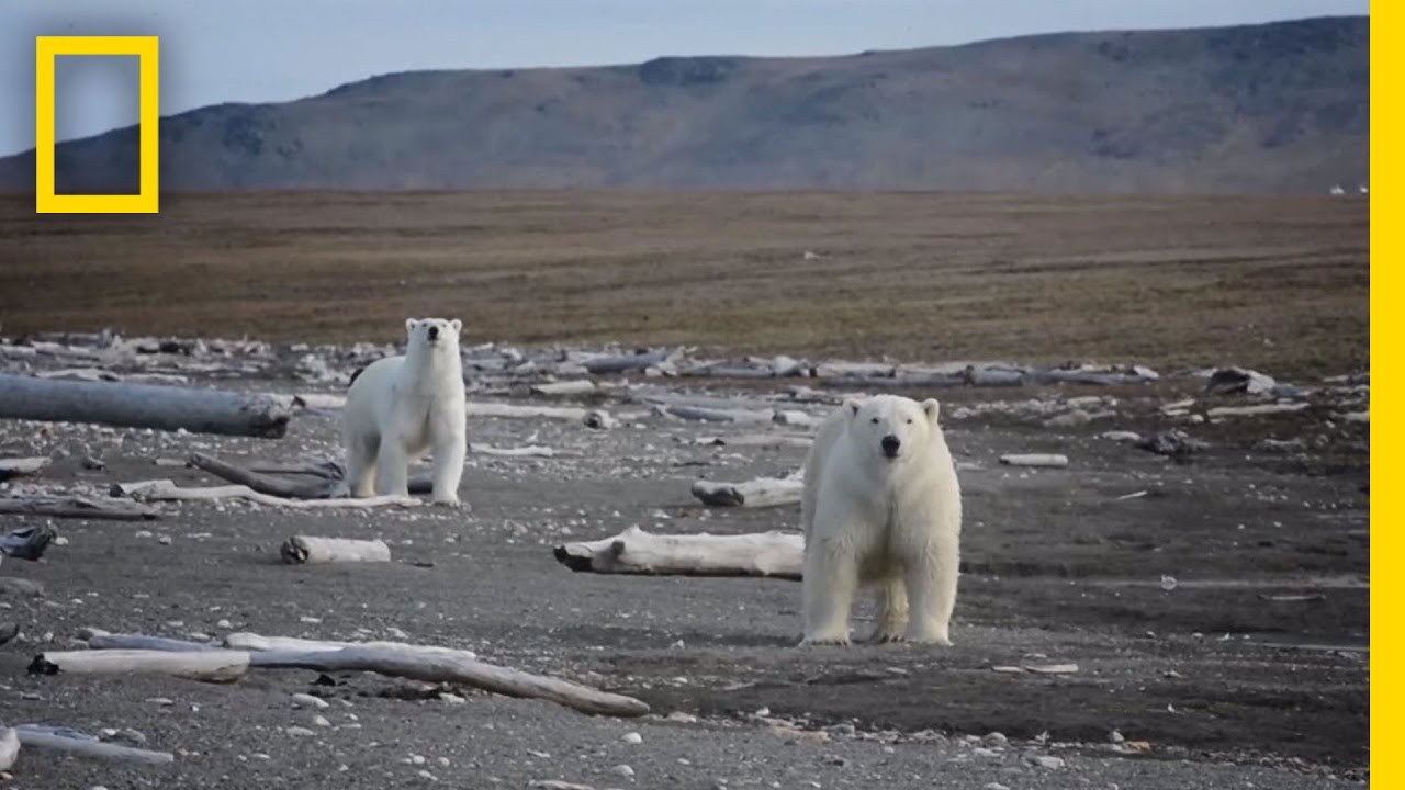 Animals Thrive on Pristine Russian Island | National Geographic thumbnail