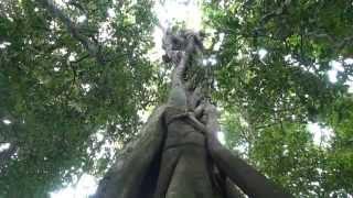 Tree Birth
