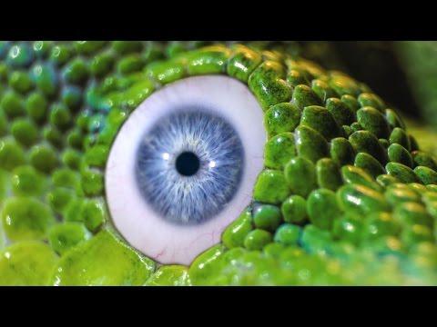 Önmasszázs a látás javítása