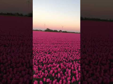 Фото Сделал молнии для видео в After Effect.