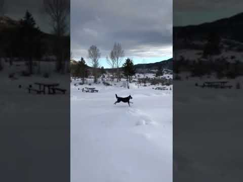 Video Of Stagecoach, CO