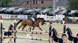 Budgie 1.35 Two Phase CSI2* Opglabbeek - 5th