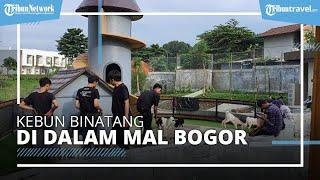 Mengunjungi Boxzoo, Kebun Binatang Mini di Dalam Mal Boxies 123 Bogor yang Unik