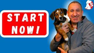 When To Start Training A Beagle -  Basics Of Dog Training - Part 1
