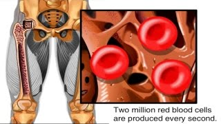 How Red Blood Cells are Made Animation - Formation of RBC Video -Structure Function Blood Components