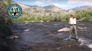 Fly Fishing Colorado - Winter