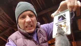 Catching BIG juicy Rats in my Garage